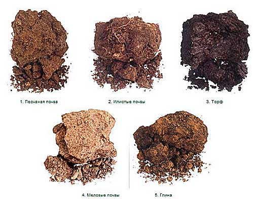 Картинки по запросу виды почв